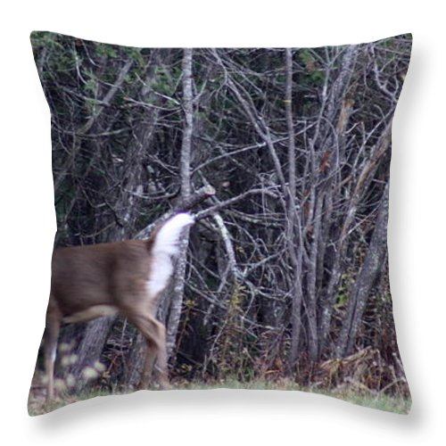 Deer Throw Pillow featuring the photograph On The Move by Greg DeBeck