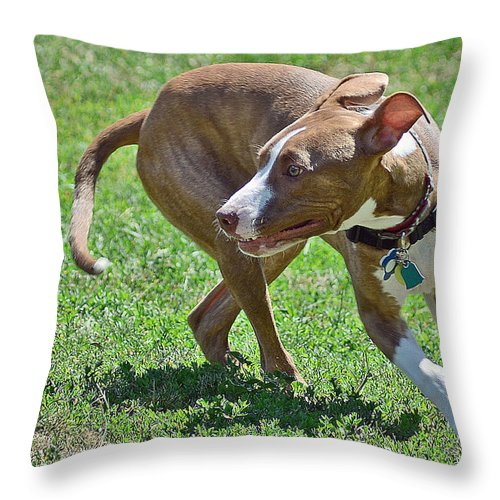 On The Run Throw Pillow featuring the photograph On The Run by Lisa Phillips