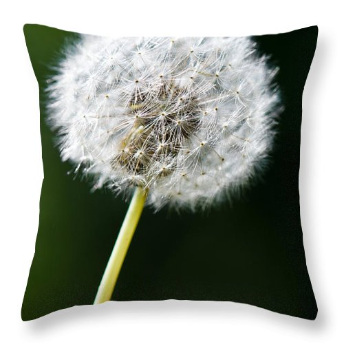 Beauty Throw Pillow featuring the photograph One Dandelion Flower Isolated by U Schade