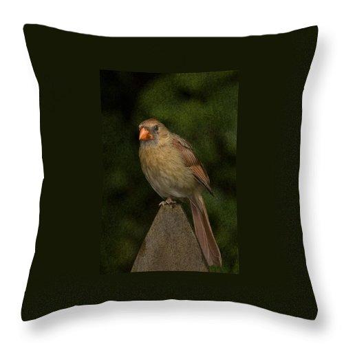 Cardinal Throw Pillow featuring the photograph One Leg by Steven Richardson