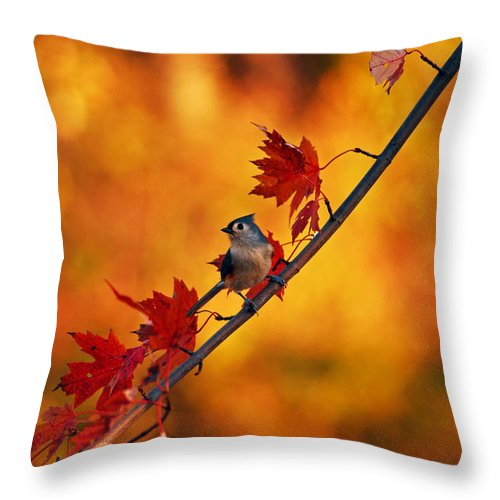 Titmouse Throw Pillow featuring the photograph One Of These Things Is Not Like The Others by Lori Tambakis