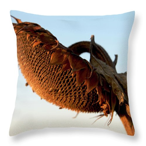 Agriculture Throw Pillow featuring the photograph One Sunflower Head Wilted by Bernard Jaubert