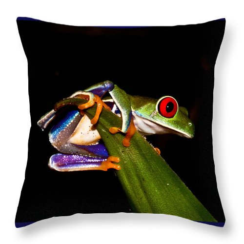 Frog Throw Pillow featuring the photograph One Two Three Jump by Tom and Pat Cory