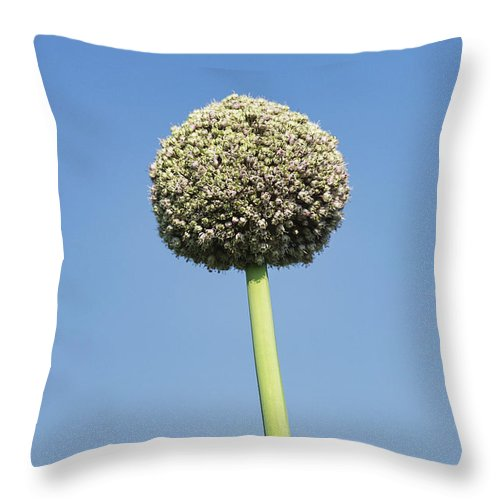 Allium Throw Pillow featuring the photograph Onion Flower by John Greim