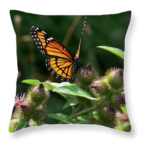 Monarch Butterfly Throw Pillow featuring the photograph Optimistic Vision by Natalie LaRocque