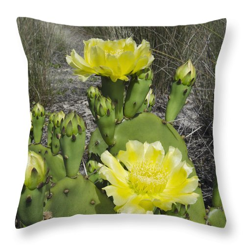 Mp Throw Pillow featuring the photograph Opuntia Opuntia Sp Cactus Flowering by Pete Oxford