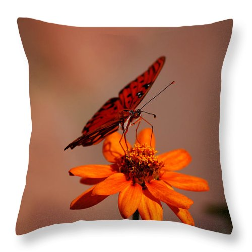 Butterfly Throw Pillow featuring the photograph Orange Butterfly Orange Flower by Lori Tambakis