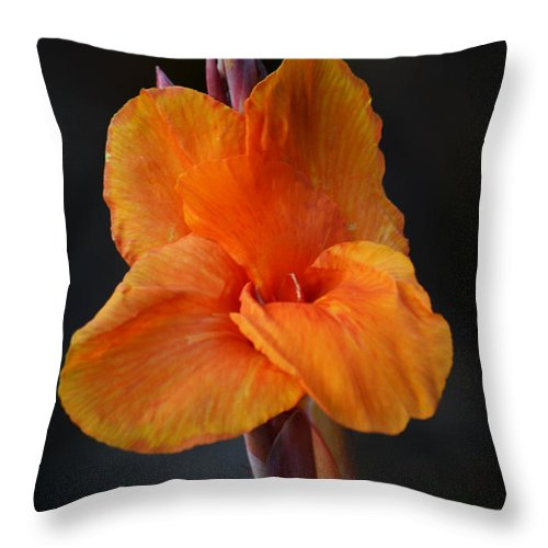 Canna Lily Throw Pillow featuring the photograph Orange Canna Lily by Melanie Moraga