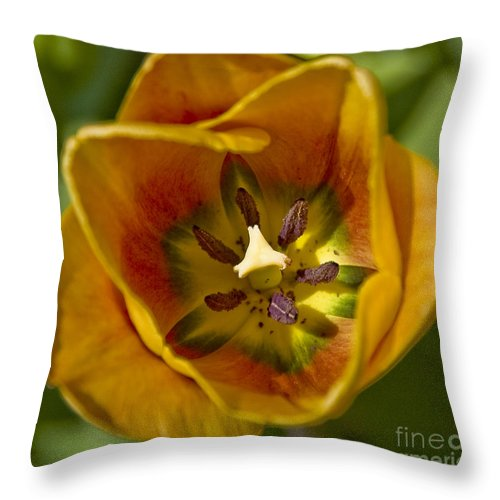 Tulip Throw Pillow featuring the photograph Orange Green And Yellow Tulip by Tim Mulina