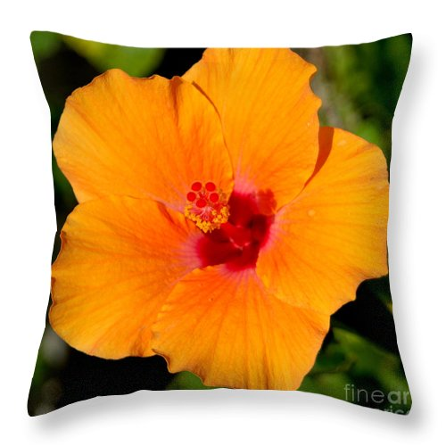 Flora Throw Pillow featuring the photograph Orange Hibiscus by Mark Gilman