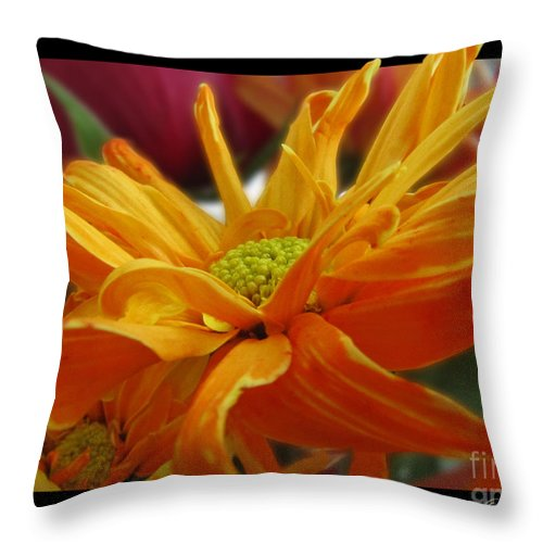 Nature Throw Pillow featuring the photograph Orange Juice Daisy by Debbie Portwood
