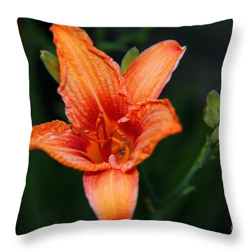 Lily Throw Pillow featuring the photograph Orange Lily by Davandra Cribbie