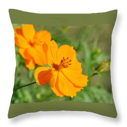 Orange Flower Throw Pillow featuring the photograph Orange Wildflower by Christine Stonebridge