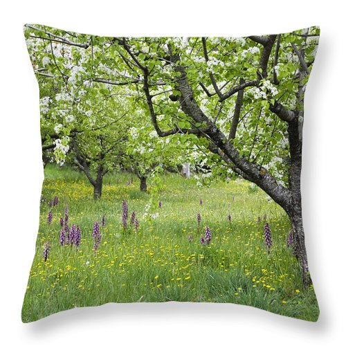 Mp Throw Pillow featuring the photograph Orchard With Flowering Orchids by Konrad Wothe