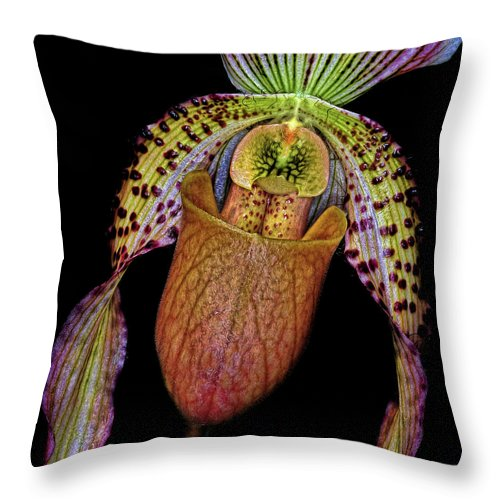 Orchid Throw Pillow featuring the photograph Orchid by Dave Mills