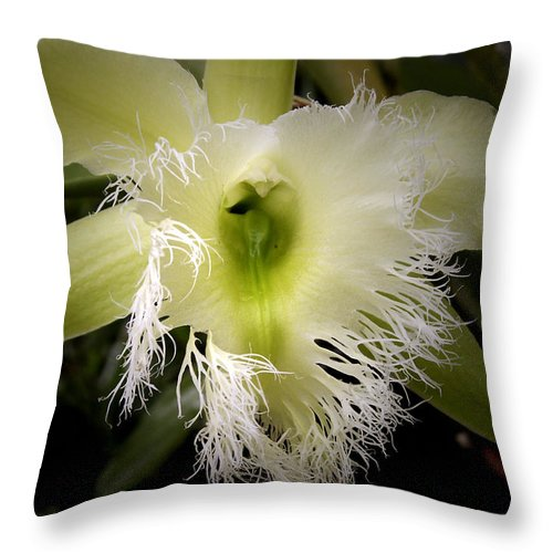 Orchid Rhyncholaelia Digbyana Throw Pillow featuring the photograph Orchid With Feathery Ends by Nancy Griswold