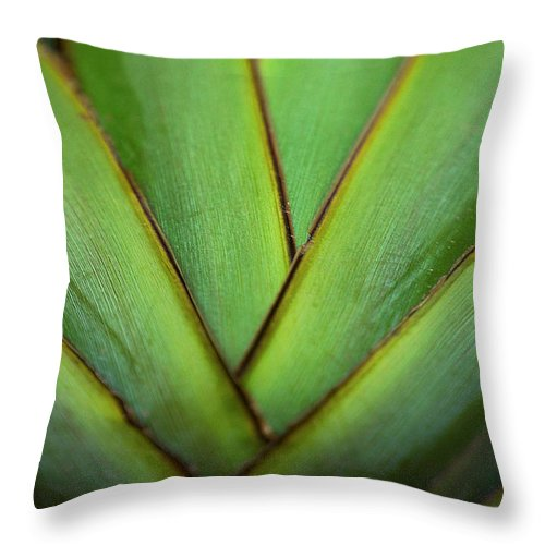Throw Pillow featuring the photograph Ornamental Palm Detail by David Resnikoff