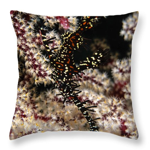Osteichthyes Throw Pillow featuring the photograph Ornate Ghost Pipefish, Fiji by Todd Winner