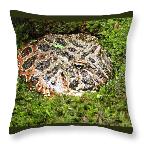 Ceratophrys Ornata Throw Pillow featuring the photograph Ornate Horned Frog by Laurel Talabere