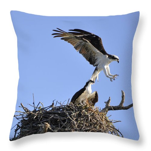 Osprey Throw Pillow featuring the photograph Osprey Coming in for a Landing by Christine Stonebridge