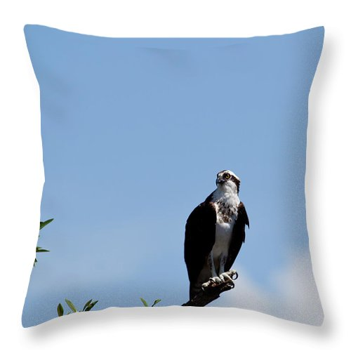 Osprey Throw Pillow featuring the photograph Osprey by Michelle Constantine