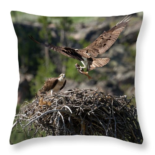 Nature Throw Pillow featuring the photograph Osprey With Fish by R Breslaw