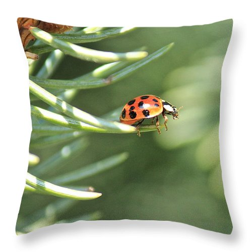 Ladybug Throw Pillow featuring the photograph Out On A Limb by Penny Meyers