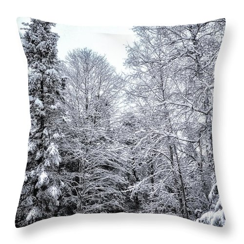 Snowy Pines Throw Pillow featuring the photograph Over Coat Of Snow by Peg Runyan
