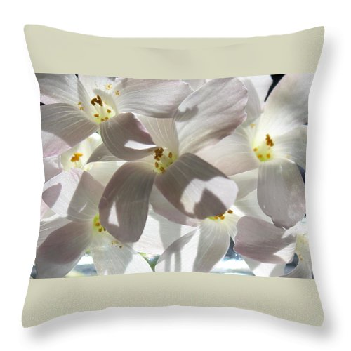 Floral Throw Pillow featuring the photograph Oxalis Flowers by Kume Bryant