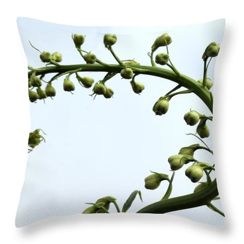 Pacific Throw Pillow featuring the photograph Pacific Giant Astolat by Henrik Lehnerer