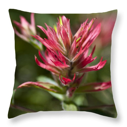 Painted-cups Throw Pillow featuring the photograph Painted-cups Of The Hillside - 3 by Paul Cannon