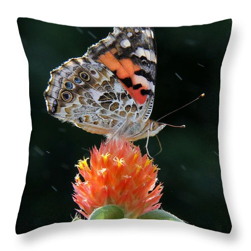 Painted Lady Throw Pillow featuring the photograph Painted Lady In A Shower by Doris Potter