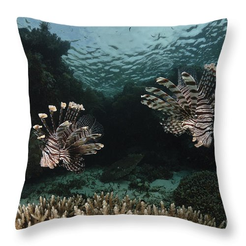 Lionfish Throw Pillow featuring the photograph Pair Of Lionfish, Indonesia by Todd Winner