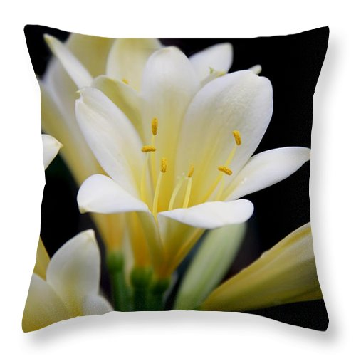 Clivia Throw Pillow featuring the photograph Pale Yellow Clivia Miniata Flowers by Jennie Marie Schell