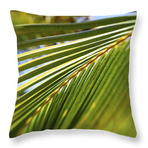 Artistic Throw Pillow featuring the photograph Palm Detail by Vince Cavataio - Printscapes