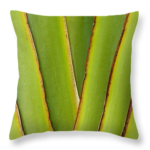 Bronstein Throw Pillow featuring the photograph Palm Frond Detail by Sandra Bronstein