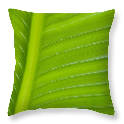 Abstract Throw Pillow featuring the photograph Palm Pattern by Joe Carini - Printscapes