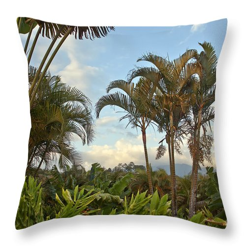 Palm Throw Pillow featuring the photograph Palms In Costa Rica by Madeline Ellis
