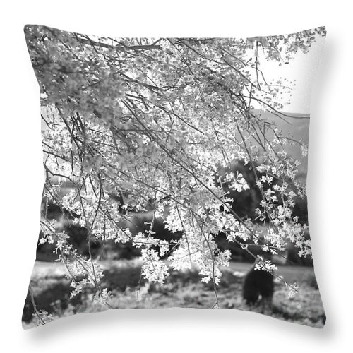 Floral Throw Pillow featuring the photograph Palo Verde Blossoms by Kume Bryant
