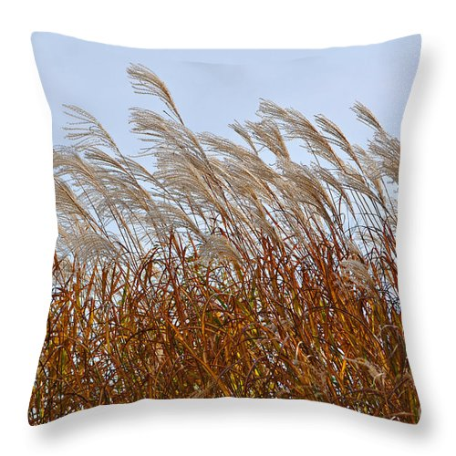 Pampas Grass Throw Pillow featuring the photograph Pampas Grass In The Wind 1 by Mary Machare