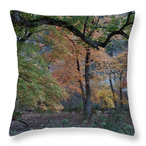 Landscape Throw Pillow featuring the photograph Panorama Of Fall Colors At Lost Maples by James Woody