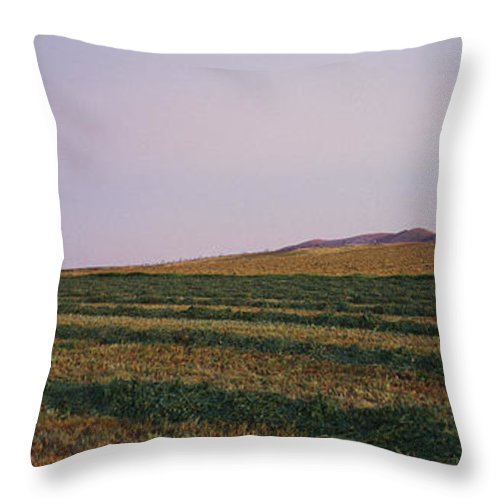 Agriculture Throw Pillow featuring the photograph Panoramic View Of An Alfalfa Field by Kenneth Garrett