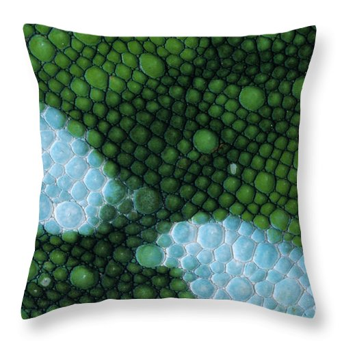 Fn Throw Pillow featuring the photograph Panther Chameleon Chamaeleo Pardalis by Ingo Arndt