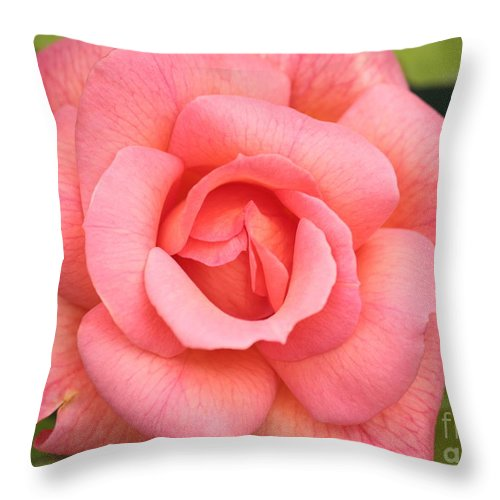 Rose Throw Pillow featuring the photograph Paris Rose by Carol Groenen
