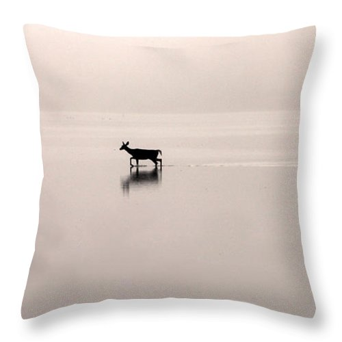Deer Throw Pillow featuring the photograph Passing By On A Foggy Morning by Jack Schultz