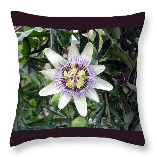 Plant Throw Pillow featuring the photograph Passion Flower by Rod Johnson
