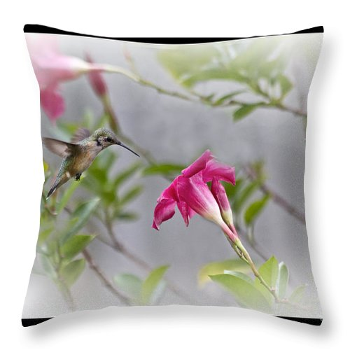 Poster Throw Pillow featuring the photograph Pastel Angel by Cris Hayes