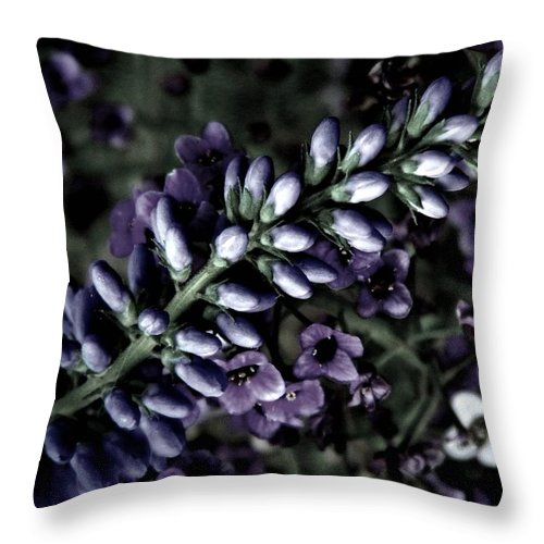 Veronica Throw Pillow featuring the photograph Pastel Veronica by Chris Berry