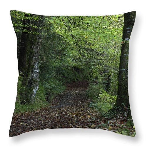 Color Image Throw Pillow featuring the photograph Path Through The Woods Inistioge by Trish Punch
