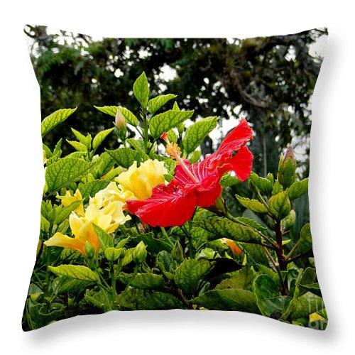 Al Bourassa Throw Pillow featuring the photograph Paute Farm Flowers by Al Bourassa